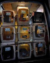 Hundetransport aus Rumänieen